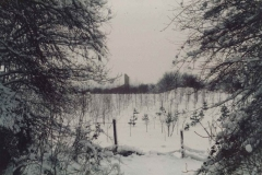 Charter Wood